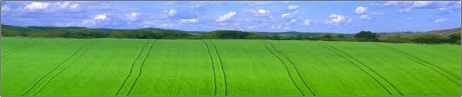 field_green