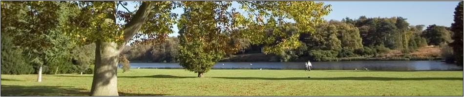 oak_tree_lake